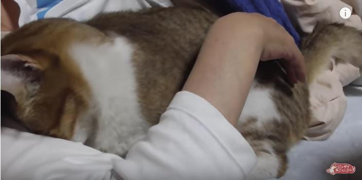 飼い主に顔をうずめる猫