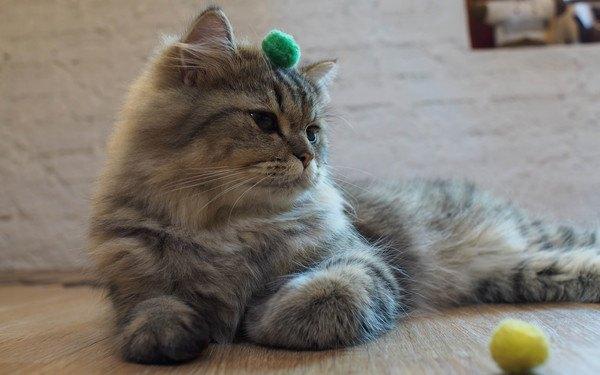 緑のボールを付けた猫