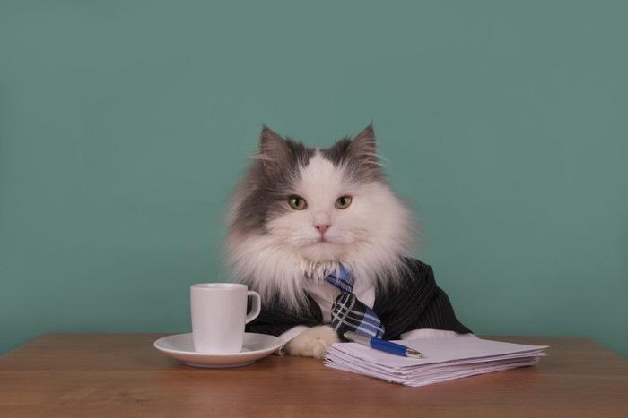 スーツ姿の猫の写真