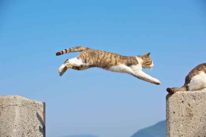 大きくジャンプする猫