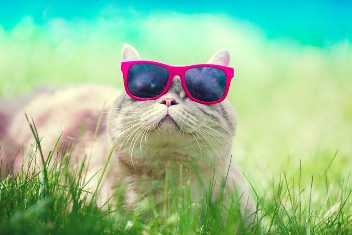 サングラスをしている猫