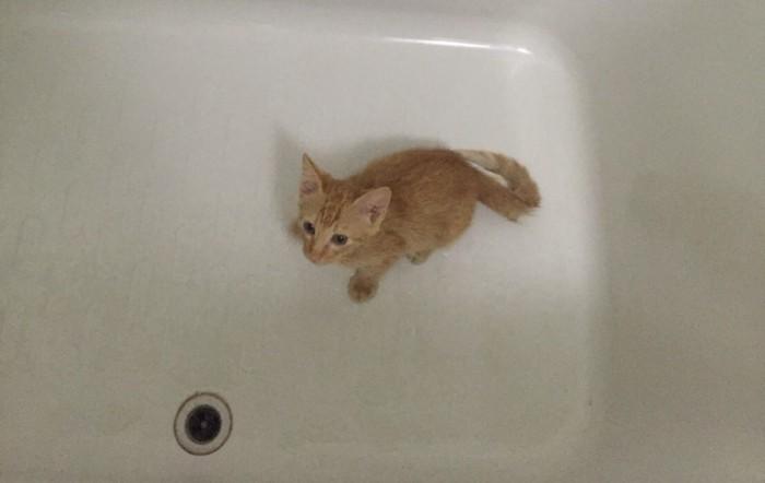 お風呂の中の猫