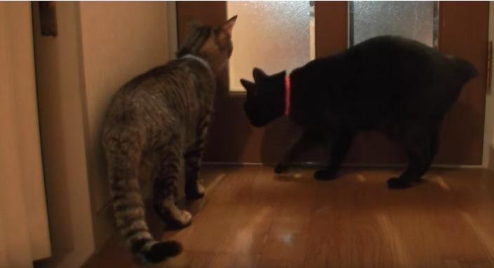 動き回る猫たち