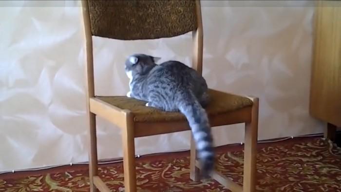 背もたれをみる猫
