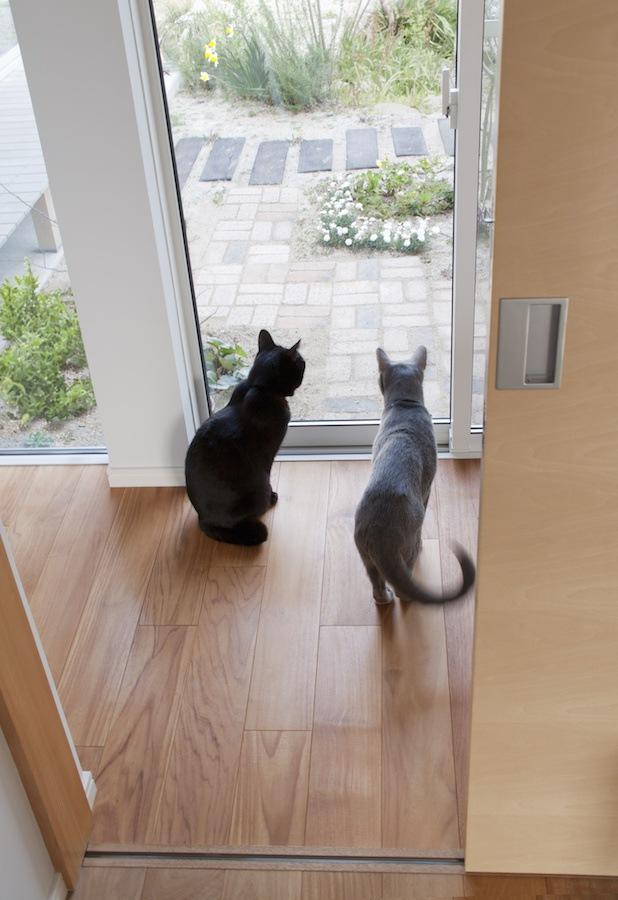 窓から外を眺める二匹の猫