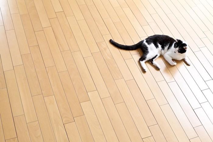 フローリングで寝る猫