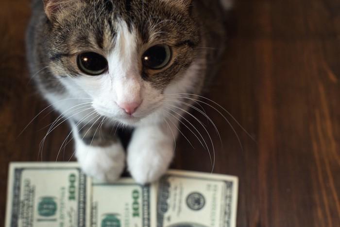 お金の上に手を置く猫