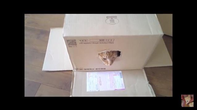 段ボール箱から顔だけ出す猫