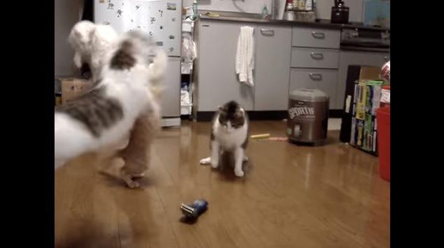飛び上がる猫たち