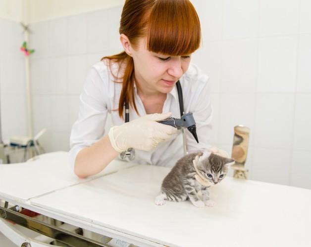 子猫と獣医