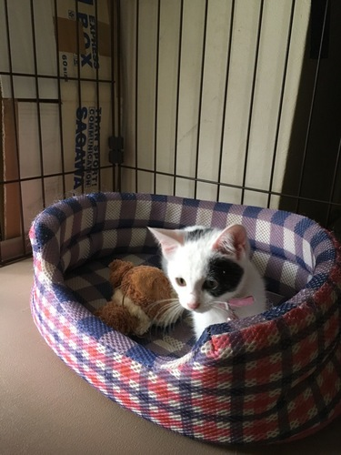 猫用ベットでくつろぐ白黒ぶち