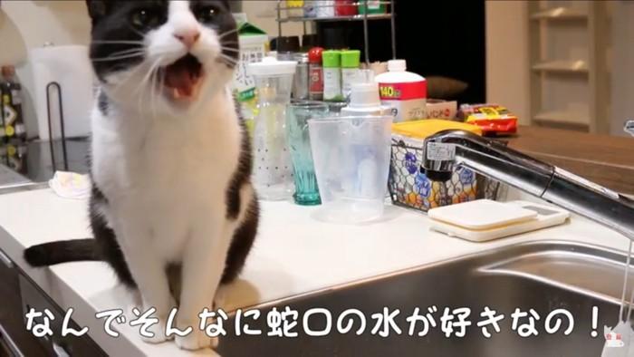 水を欲しがる猫