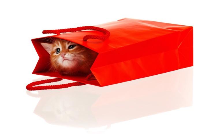 赤い紙袋に入る子猫