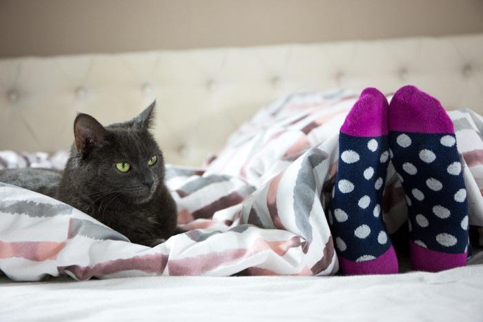 靴下を履いた足を見つめる猫