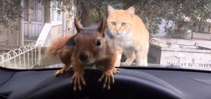リスを狙う猫
