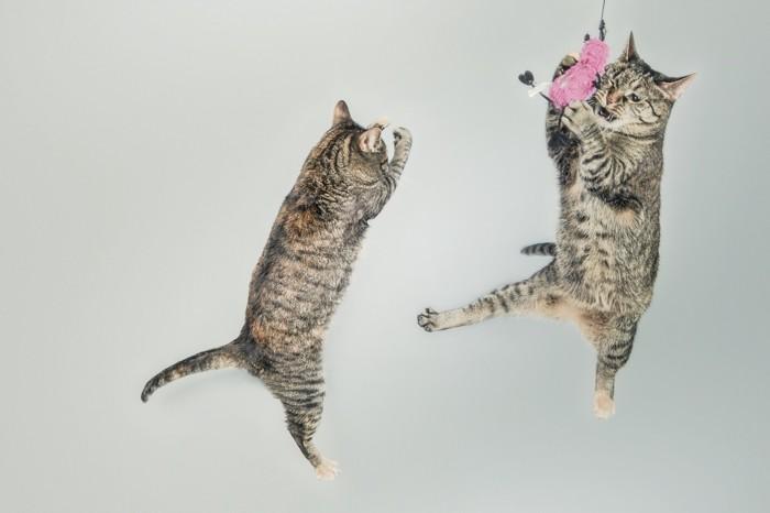 ジャンプした猫