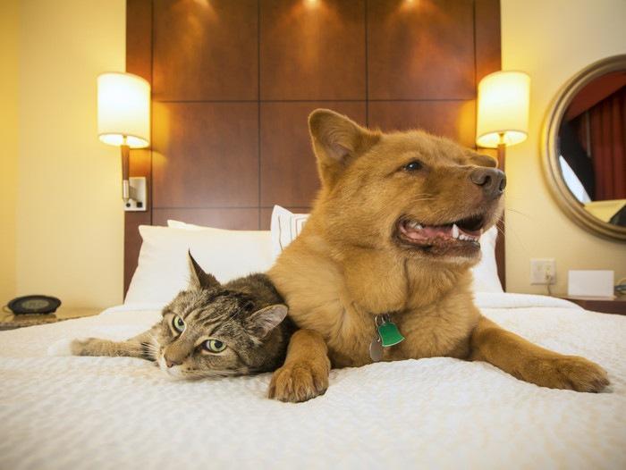 ホテルのベッドにいる犬と猫