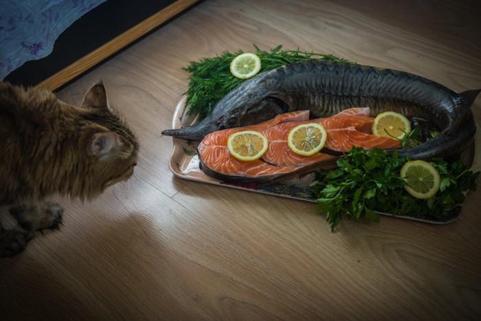 鮭料理と猫