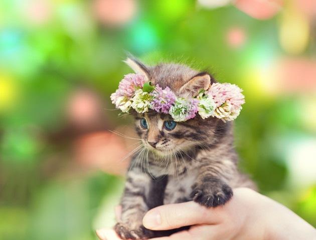 花冠をかぶっている子猫