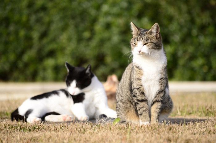 2匹の座る猫の写真