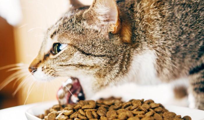 食後にキャットフードを吐く猫
