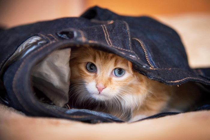 ジーンズに隠れる猫の写真