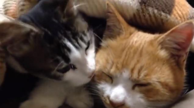 顔を寄せ合う猫達