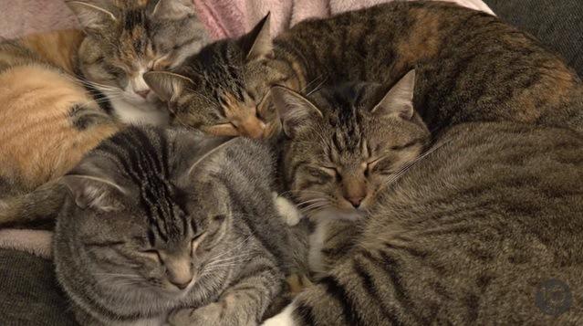 くっついて眠る4匹の猫