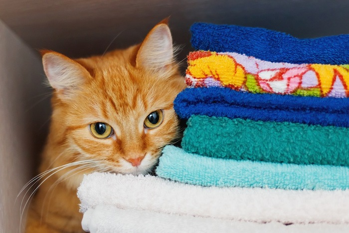 カラフルなタオルと猫