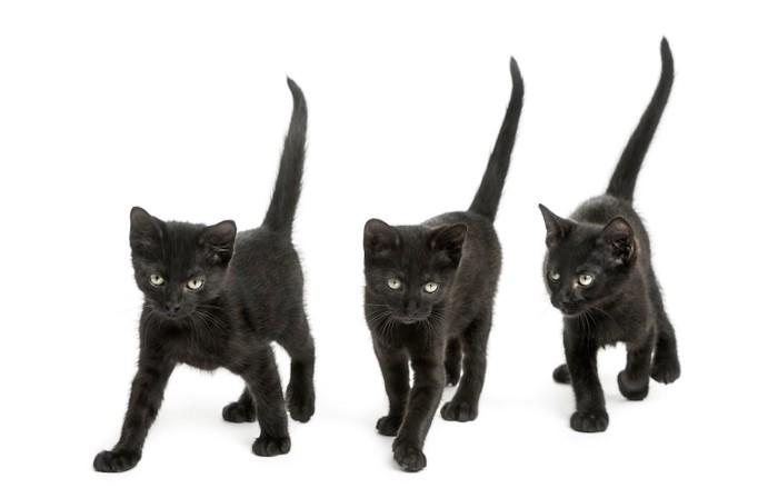 尻尾を上げて歩く三匹の黒猫