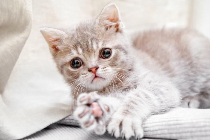 横になって手を伸ばす子猫