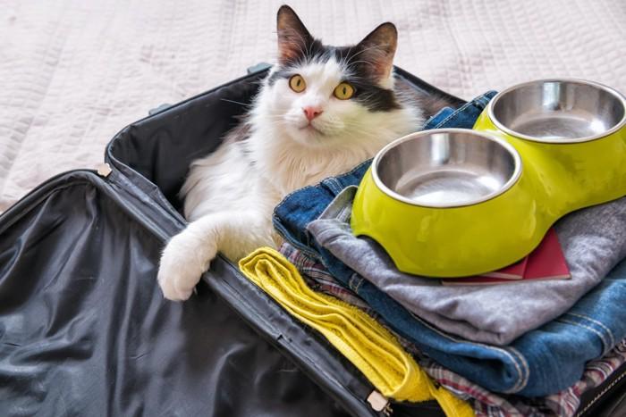 旅行鞄に入る猫