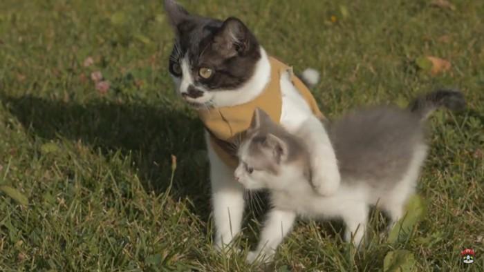 子猫を助ける