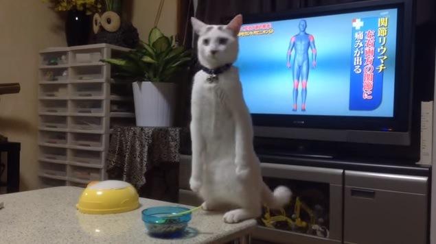 テーブルの上で立つ猫