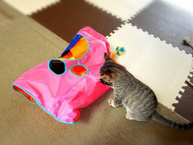 猫とビニール素材のおもちゃ