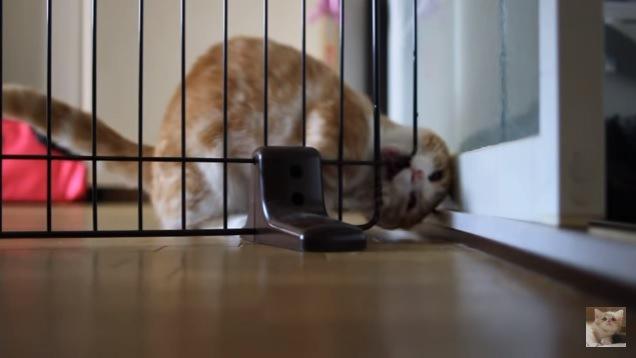 柵をかじる猫