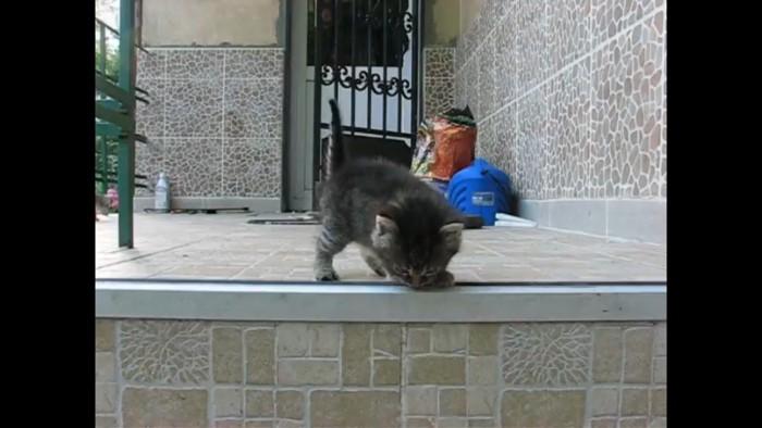 階段を降りようとする猫