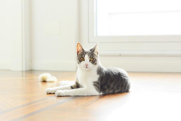 床でくつろぐ猫