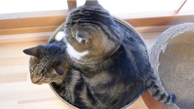 向かって左を向く下の猫(上から撮影)