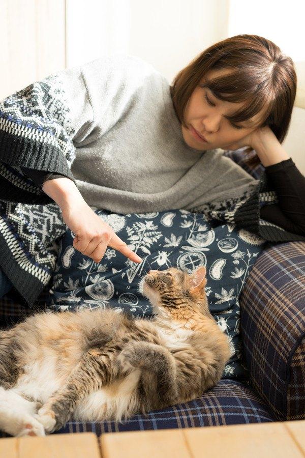 女性の人差し指を嗅ぐ猫