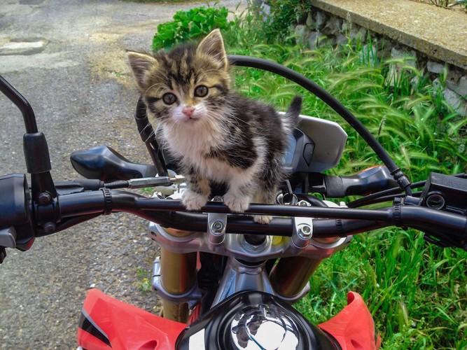 バイクに乗ってこちらを見つめる子猫