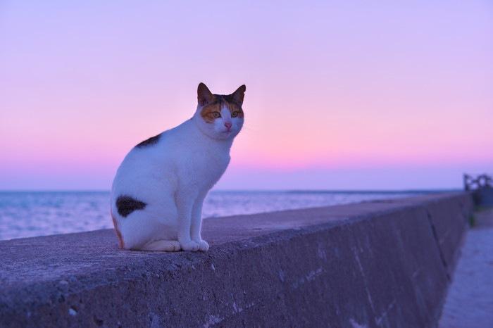 夕暮れの海と猫