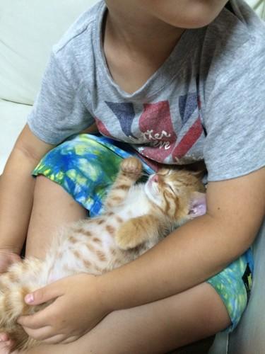 息子の膝で眠る子猫の写真