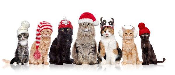 帽子を被る猫達