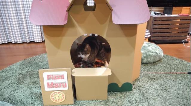 ハウスの中に見える猫