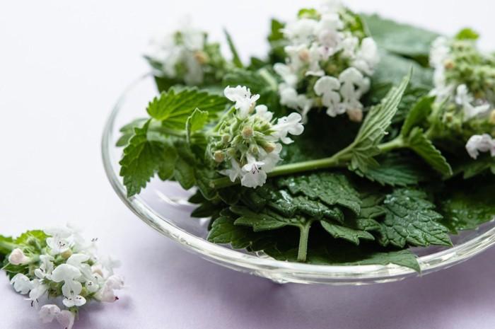 皿の上の植物