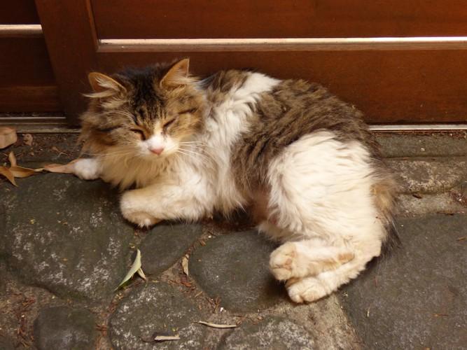 玄関で寝転んでいる猫