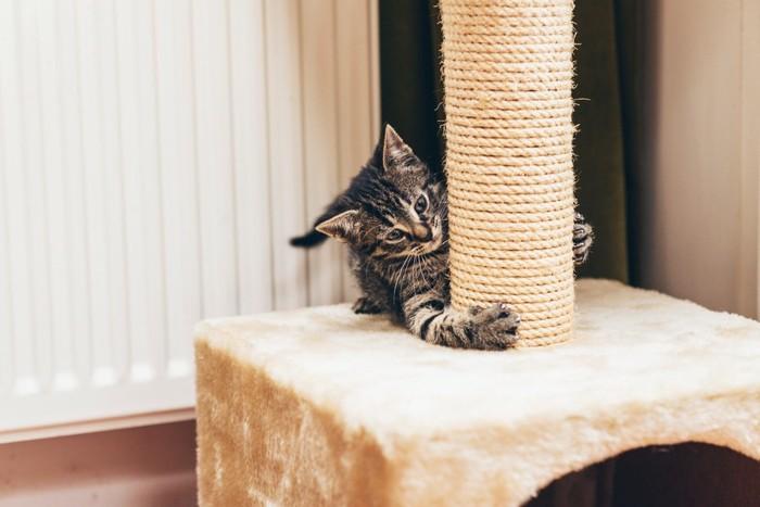 キャットタワーで爪を研ぐ猫