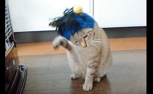 前足を器用に使う猫