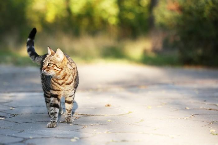 外を散歩する猫